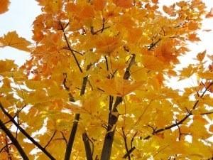"<alt=""Fall Color Trends""/>"