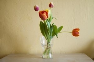 "<alt=""Colorful Tulips""/>"